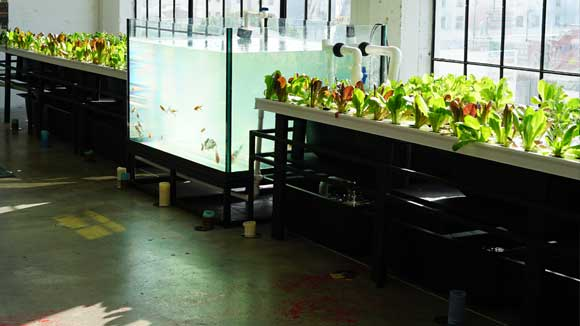 Office_Indoor_Aquaponics_System